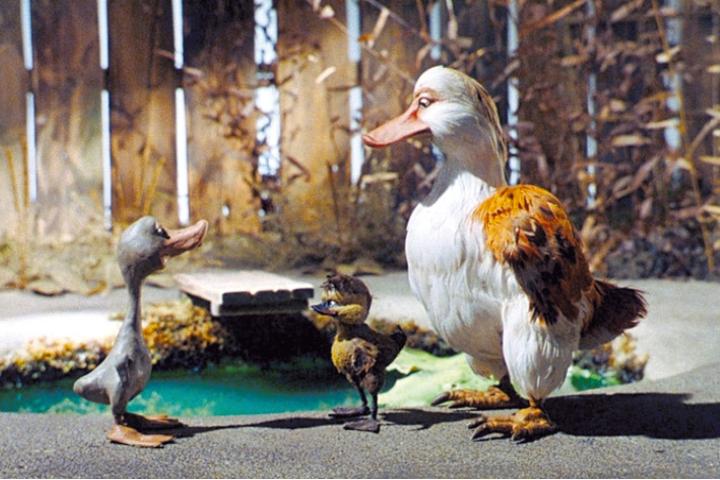 vilain-petit-canard